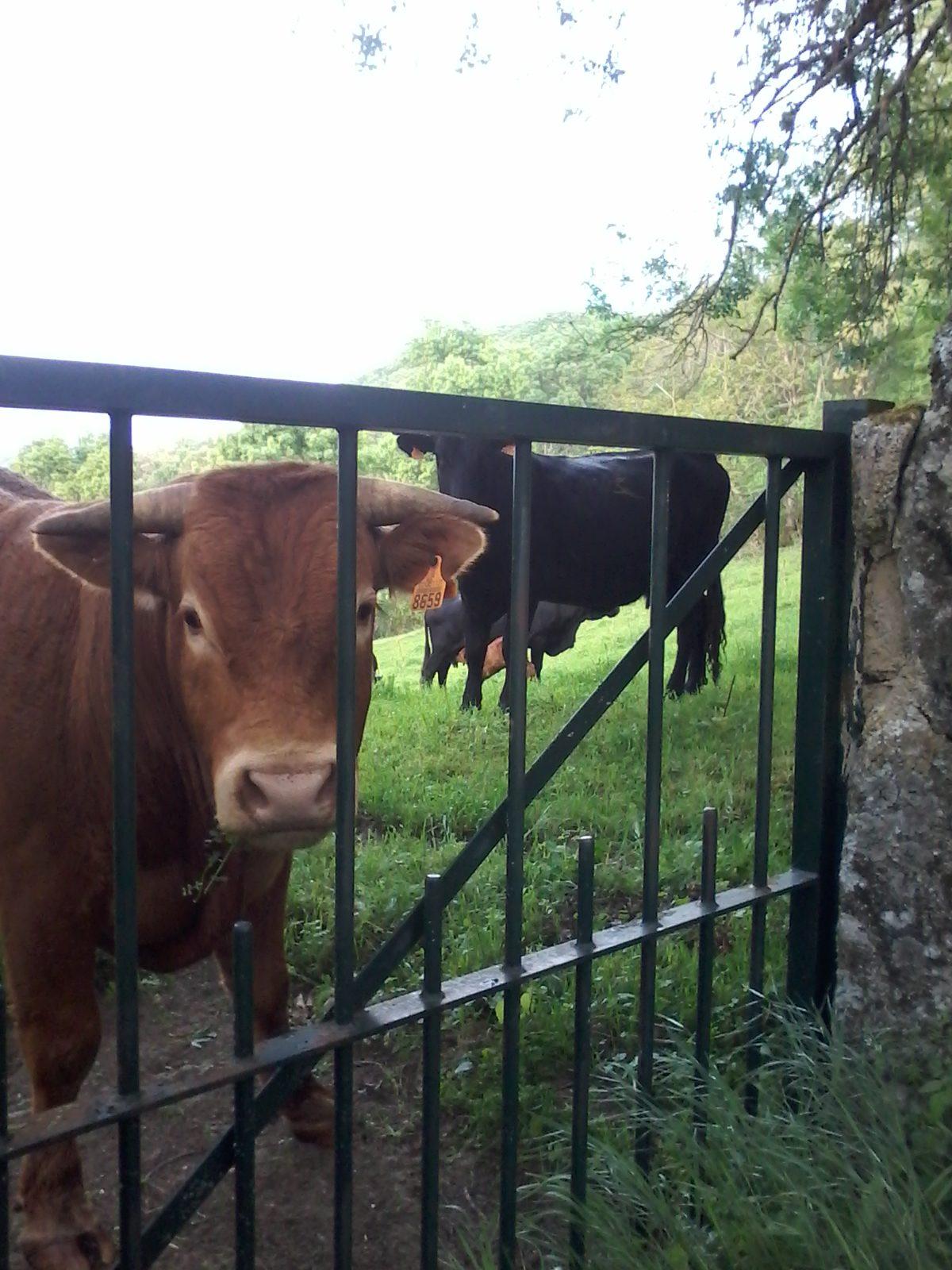Die tierischen Nachbarn